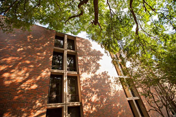 Clements Hall exterior with tree branches