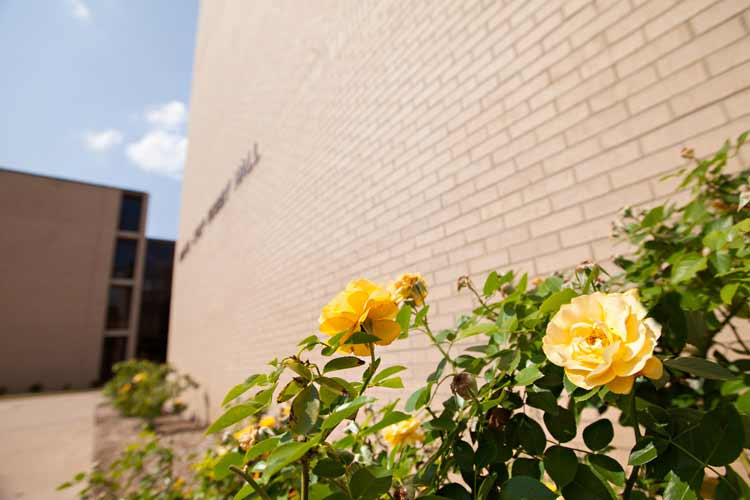 Hobby Hall exterior view with rose bush in foreground