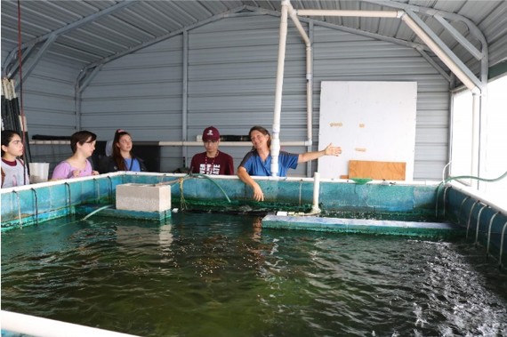 Aquaponics at Aquatic Greens Farm